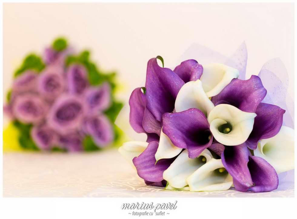 Foto video Floarea Soarelui Brasov